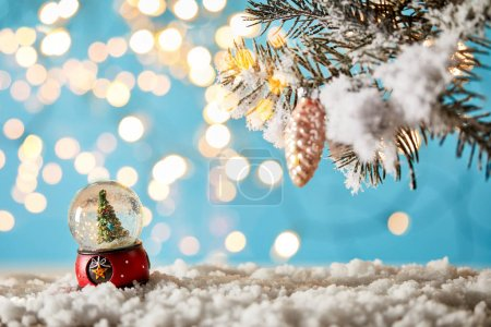 christmas tree in snowball standing on blue with spruce branches in snow and lights bokeh