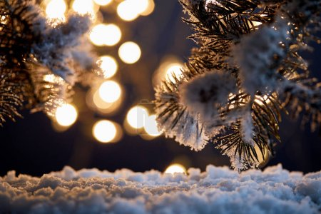 Photo for Close up of spruce branches in snow with christmas lights bokeh at night - Royalty Free Image