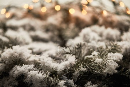 Photo pour Close up of spruce branches in snow with blurred christmas lights - image libre de droit