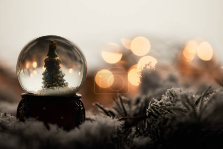 Photo pour Snowball with little christmas tree standing on spruce branches in snow with blurred lights - image libre de droit