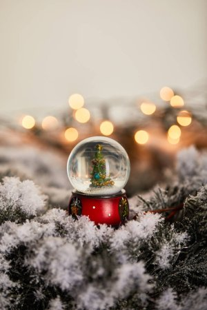 Photo for Decorative snowball with christmas tree standing on spruce branches in snow with blurred lights - Royalty Free Image