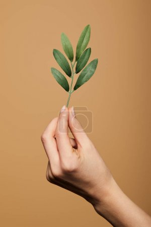Photo pour Vue recadrée de la femme tenant la plante verte isolée sur beige - image libre de droit