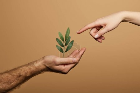 Photo for Cropped view of woman pointing with finger at green plant in man hand isolated on beige - Royalty Free Image