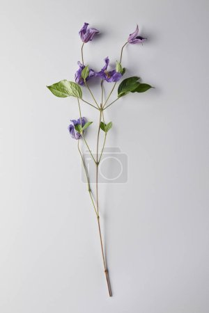top view of violet flowers on white background