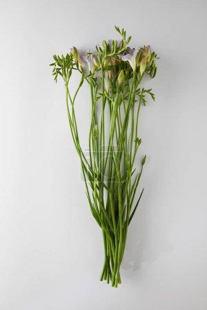 Photo pour Top vue de fleurs de la violette Freesia sur fond blanc - image libre de droit