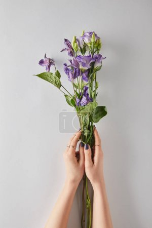 Photo for Cropped view of woman holding violet flowers on white background - Royalty Free Image