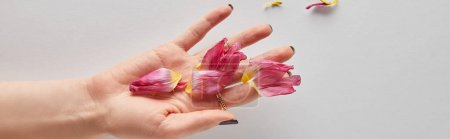 cropped view of woman holding pink petals on white background, panoramic shot