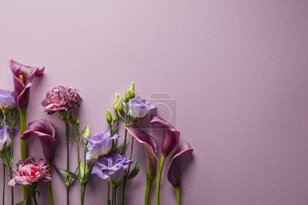 Photo pour Vue de dessus de belles fleurs sur fond violet avec espace de copie - image libre de droit