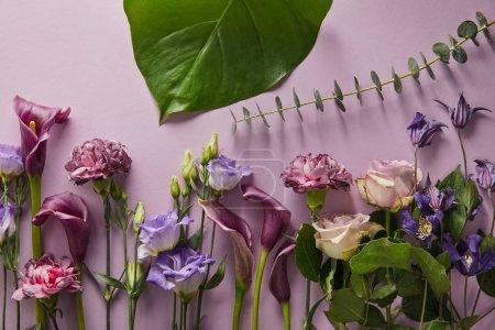 Photo pour Top vue de magnifiques fleurs aux feuilles vertes sur fond violet - image libre de droit