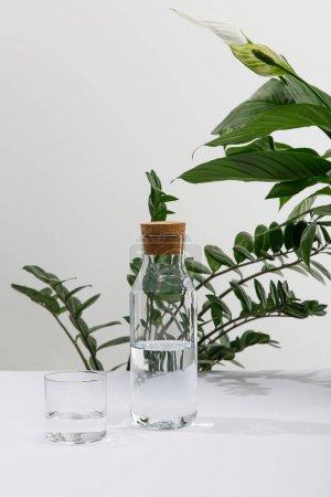 Photo pour Verre et bouteille d'eau douce près des plantes vertes sur la surface blanche - image libre de droit