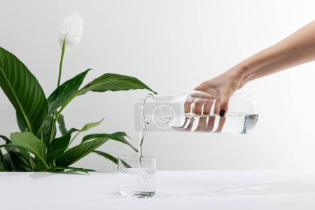 Photo for Cropped view of woman pouring water from bottle in glass near green peace lily plant on white surface - Royalty Free Image