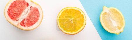 Photo pour Vue en haut du pamplemousse, citron, moitiés orange sur fond blanc et bleu, photo panoramique - image libre de droit