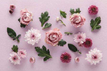 Foto de Vista superior de los crismáticos y rosas primaverales florecientes con hojas en fondo violeta. - Imagen libre de derechos