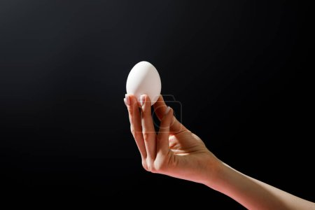 Photo for Cropped view of woman holding chicken egg isolated on black - Royalty Free Image