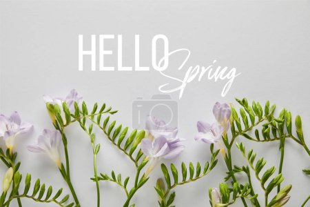 Photo for Top view of violet flowers on white background, hello spring illustration - Royalty Free Image