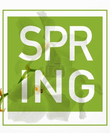Photo pour Belles fleurs d'orchidée sur branche isolée sur blanc, illustration de printemps verte - image libre de droit