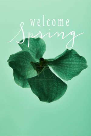 Photo for Colorful green orchid flower isolated on green, welcome spring illustration - Royalty Free Image
