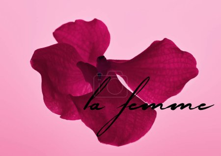 Photo for Colorful pink orchid flower isolated on pink, la femme illustration - Royalty Free Image