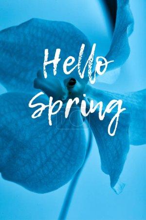 Photo pour Vue rapprochée de fleur d'orchidée bleue colorée isolée sur bleu, illustration de printemps bonjour - image libre de droit
