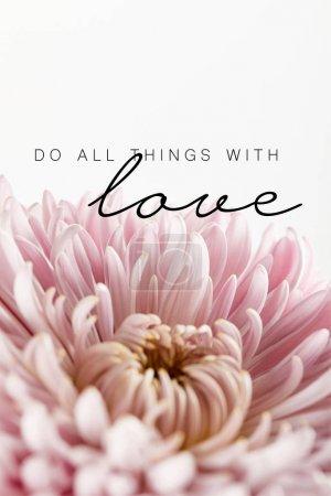 Photo pour Vue rapprochée du chrysanthème rose isolé sur blanc, faire toutes choses avec l'amour illustration - image libre de droit