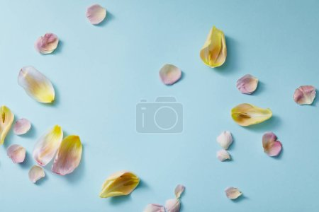 Photo pour Vue du dessus des pétales floraux épars sur fond bleu - image libre de droit