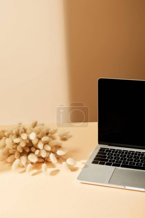 Photo for Laptop with blank screen near lagurus spikelets on beige background - Royalty Free Image