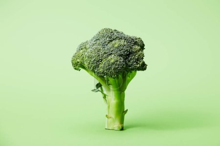 Photo for Ripe green broccoli on green with copy space - Royalty Free Image