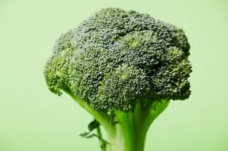 close up of ripe green broccoli on green