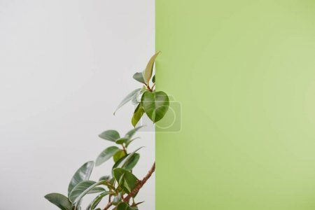 Photo for Natural plant with green leaves on grey background - Royalty Free Image