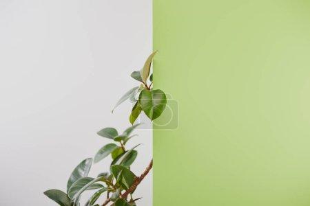 Foto de Planta natural con hojas verdes sobre fondo gris - Imagen libre de derechos