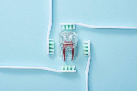 Photo pour Pose plate avec brosses à dents et dent artificielle en plastique sur fond bleu - image libre de droit