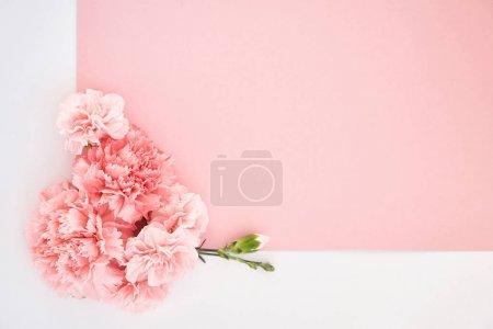 Photo pour Vue du dessus des œillets sur fond rose et blanc - image libre de droit