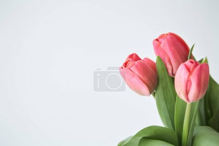 Photo pour Printemps fleurs tulipes roses avec des feuilles vertes isolées sur blanc - image libre de droit