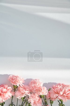 Photo for Top view of pink carnations on white background with sunlight and shadows - Royalty Free Image