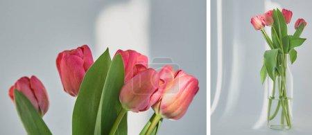 Foto de Collage de tulipanes rosados florecientes de primavera con hojas verdes en florero sobre blanco con sombras - Imagen libre de derechos