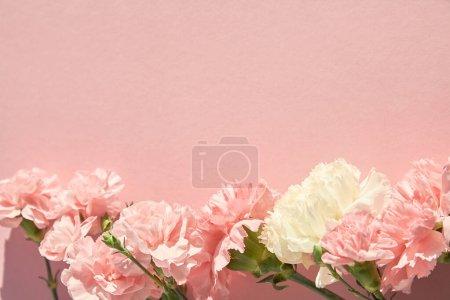 Foto de Vista superior de claveles en flor sobre fondo rosa - Imagen libre de derechos
