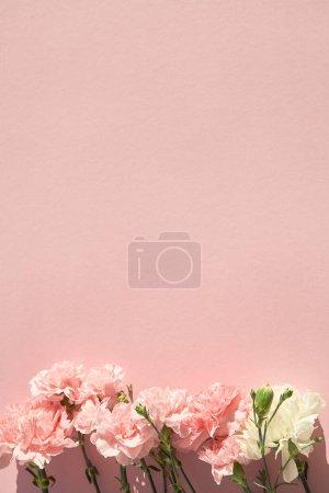 Photo pour Vue de dessus des oeillets en fleurs sur fond rose - image libre de droit