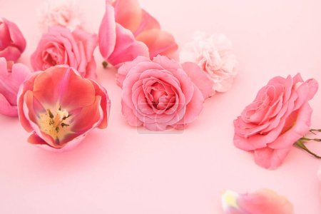 Photo for Blooming spring flowers on pink background - Royalty Free Image