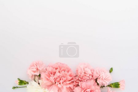 Photo for Top view of pink carnations on white background with copy space - Royalty Free Image