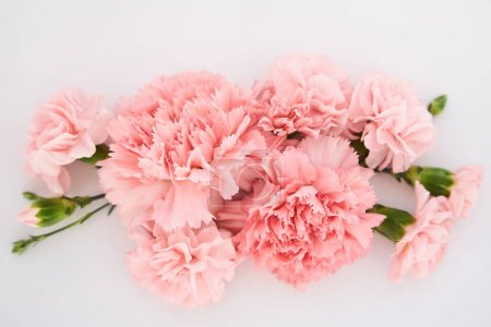 Photo for Top view of pink carnations on white background - Royalty Free Image