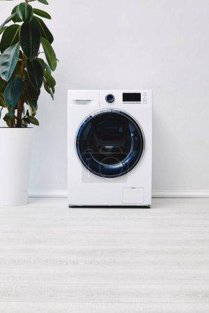 Photo pour Plante verte près de la machine à laver moderne dans la salle de bain - image libre de droit