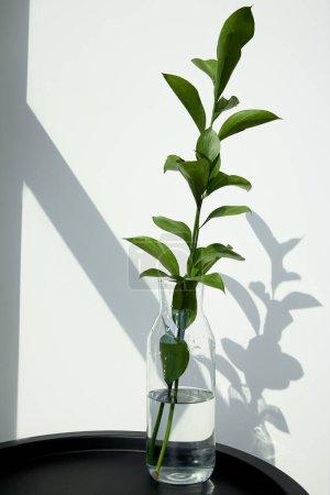 Photo pour Feuilles vertes et fraîches en verre avec de l'eau près du mur blanc - image libre de droit