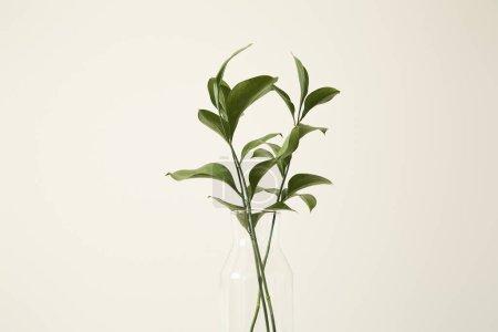 Photo pour Plantes vertes avec des feuilles fraîches dans un vase en verre - image libre de droit