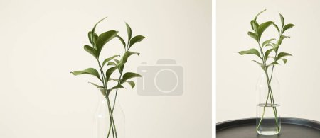 Photo for Collage of green plants with fresh leaves in glass vases - Royalty Free Image