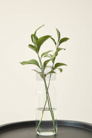 Photo for Green plants with fresh leaves in glass vase with water - Royalty Free Image