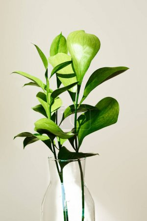 green plants with leaves in glass vase near white wall
