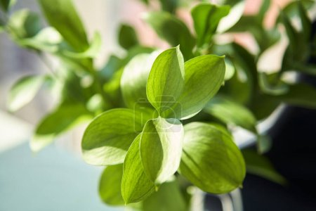 Photo for Close up of green plant with fresh leaves - Royalty Free Image