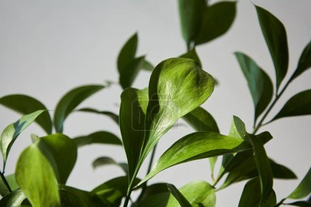 Photo for Selective focus of green and fresh leaves - Royalty Free Image