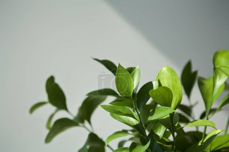 Photo for Selective focus of fresh leaves at home - Royalty Free Image