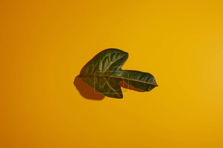 top view of tropical green leaf on yellow background with shadow
